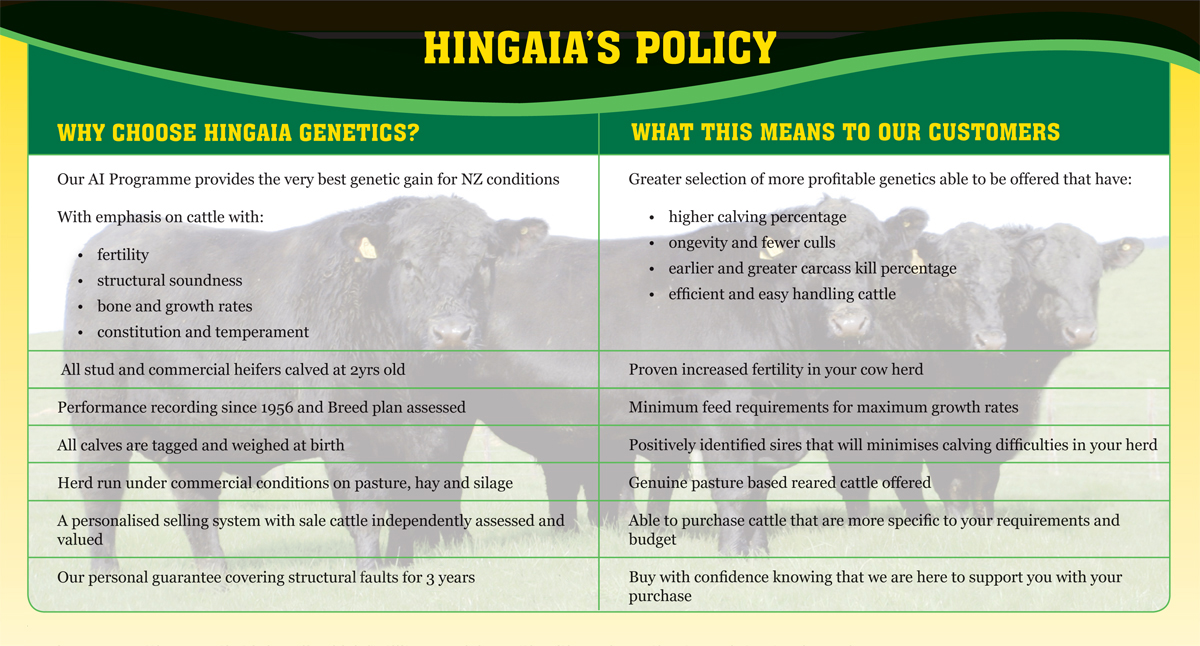 why choose hingaia angus